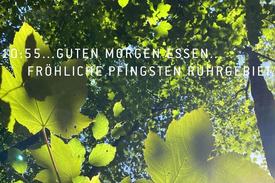 Pfingsten bei Ihren Steuerberatern in Essen. Wald am Bredeney See | Tanja Schulte Steuerberaterin